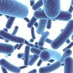 Kết hợp PROBIOTICS (Men vi sinh) VÀ FOS (PREBIOTICS) trong y học cổ truyền để điều trị rối loạn tiêu hóa